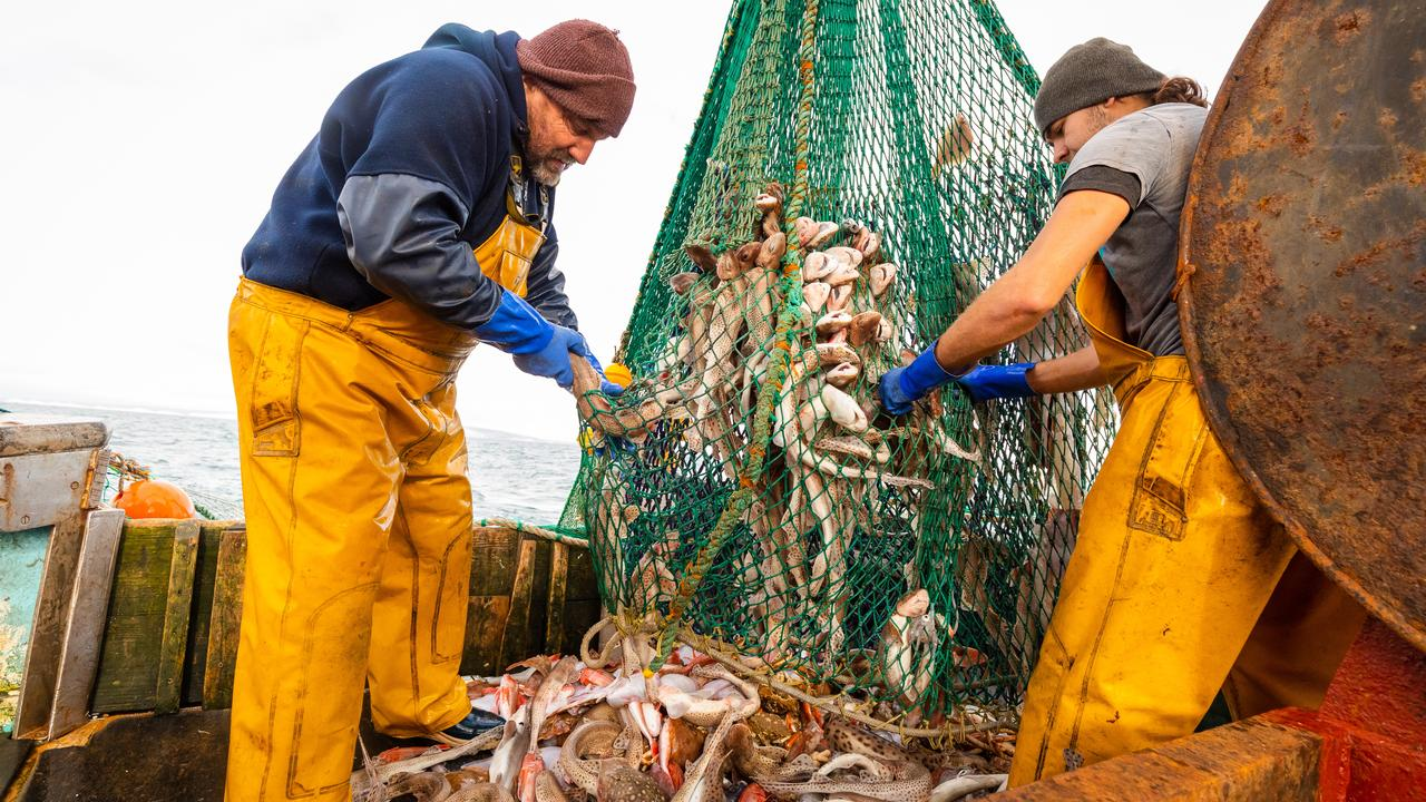 Belgian fishermen return to British waters after being granted new licenses |  right Now