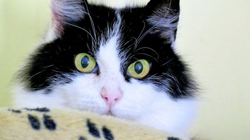 Cat lives 11 days in the roof of New York Airport |  abroad