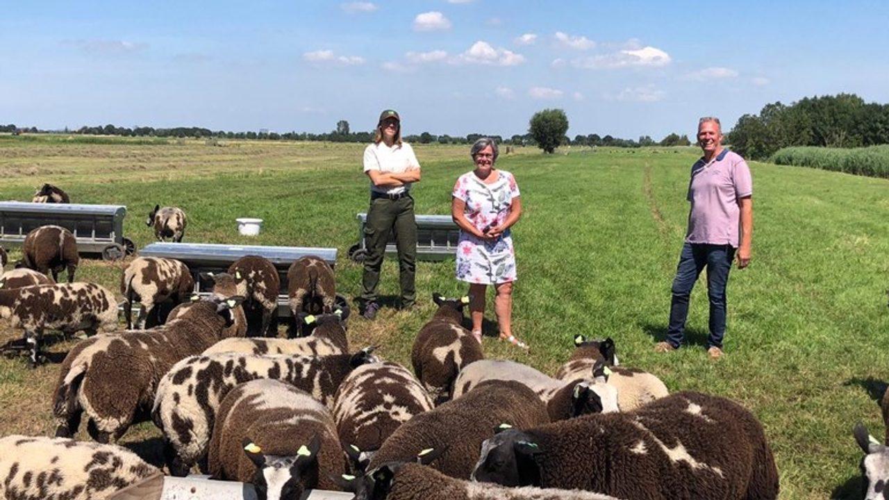 A flock of sheep is permanently located at Maaslandse Bos