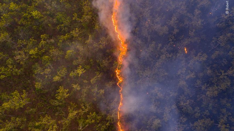 Australian Bushfire Wins International Prize for Wildlife Photography - Early Birds