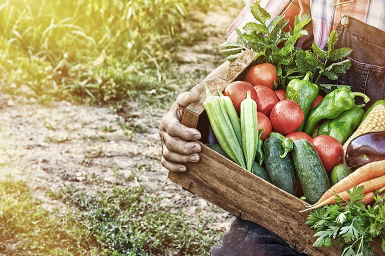 More vegetables and less meat are better for your brain
