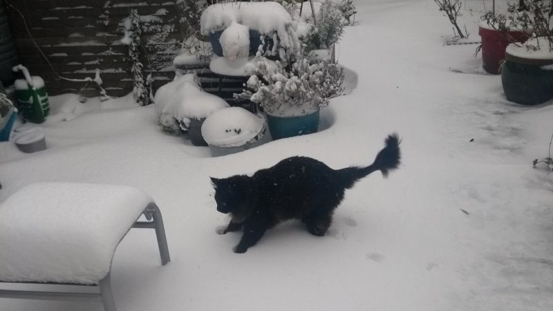 Playing in the snow was fatal to Quibos (3): `` Enjoy it for ten minutes ''