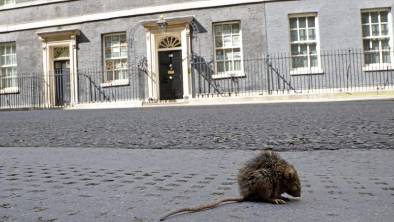 "The Rat advances in empty London: ""The city awaits a surprise when it opens"" 