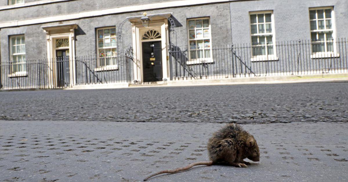 "The Rat advances in empty London: ""The city awaits a surprise when it opens"""