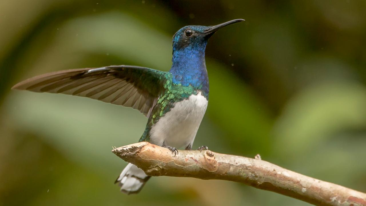 Drones and propellers may be quieter due to the hummingbird hunt |  Currently