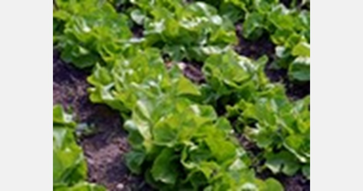 Keeping leafy greens fresh is an exact science