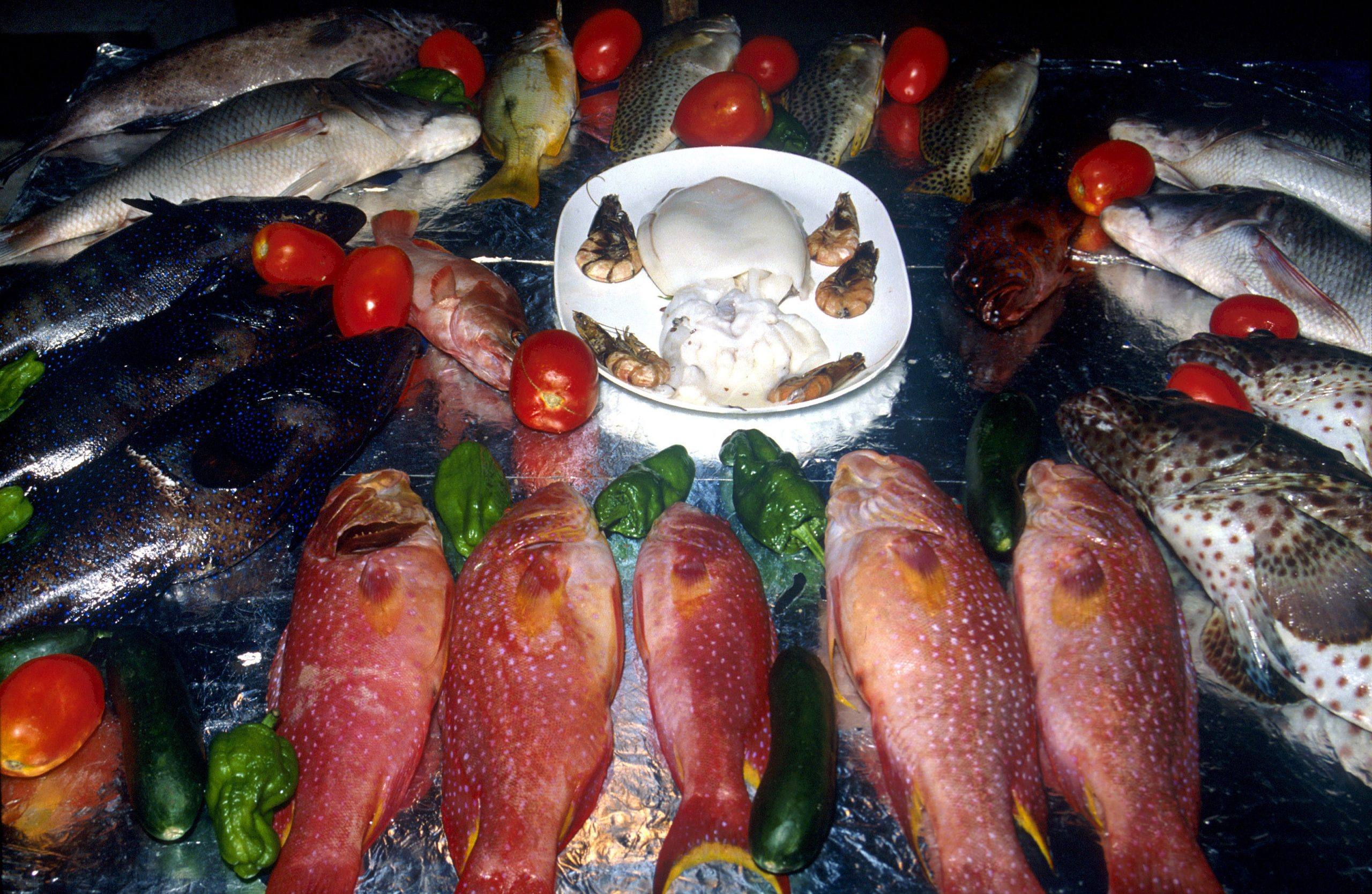 More than a third of all fish sold are actually cheaper species – Wel.nl