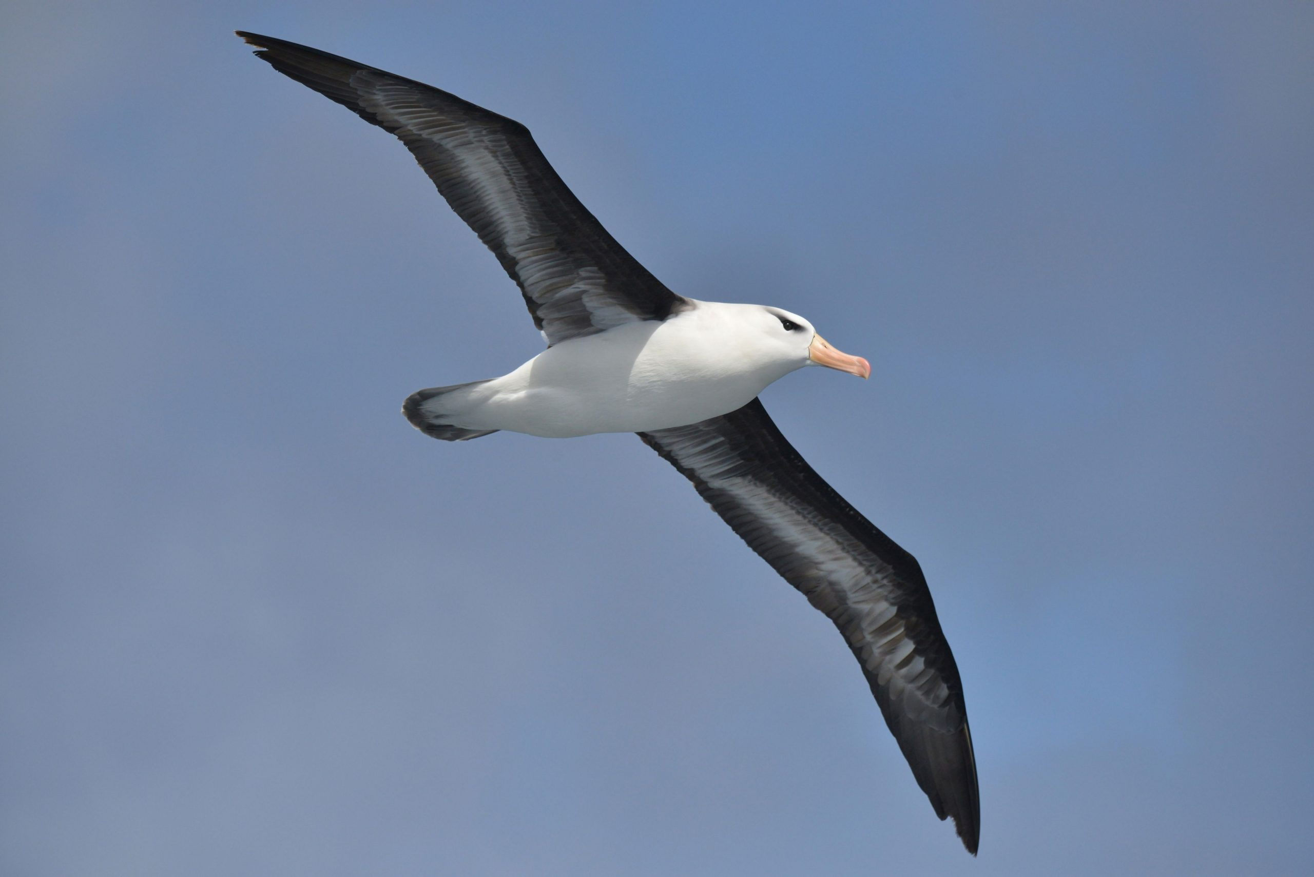 Movie: Albatross makes a tough landing and goes viral