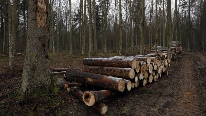 Poland wants to resume logging in Bialowisa Forest