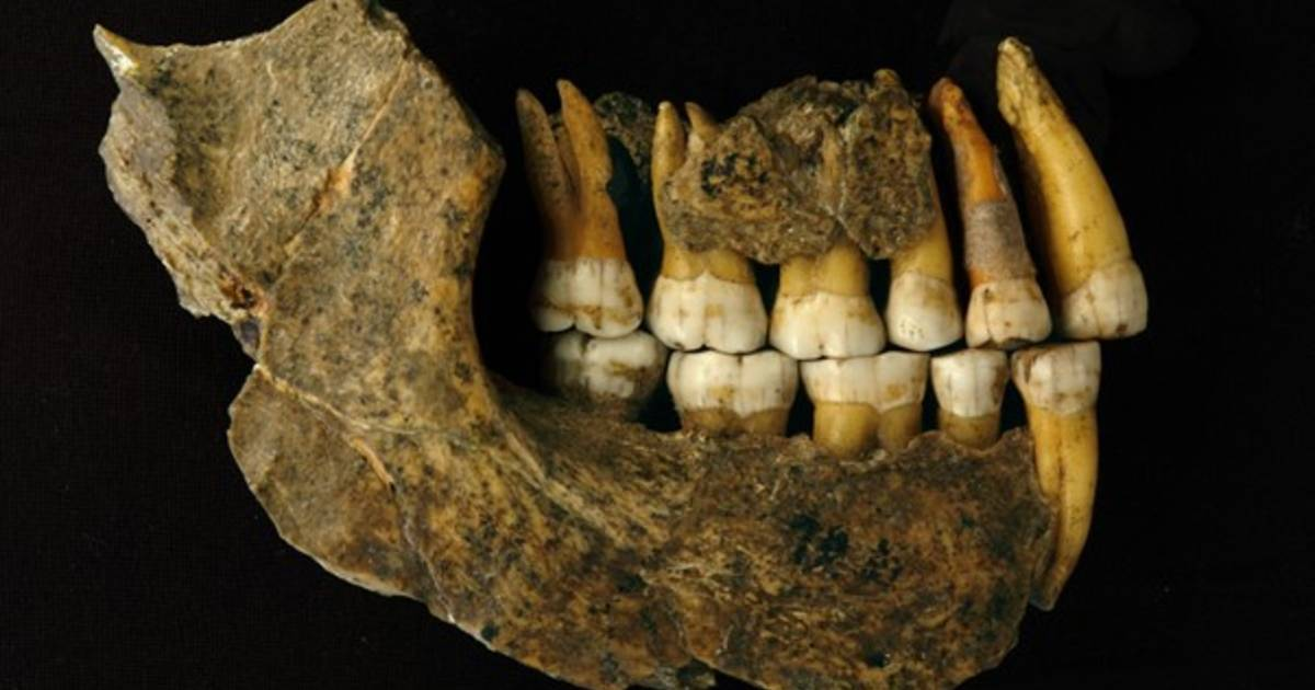 The disappearance of Neanderthals from Belgium thousands of years ago than it was thought |  Science