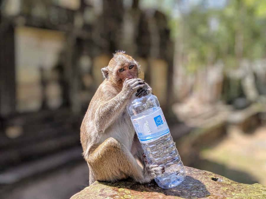 Why Homo sapiens is literally a water-saving monkey