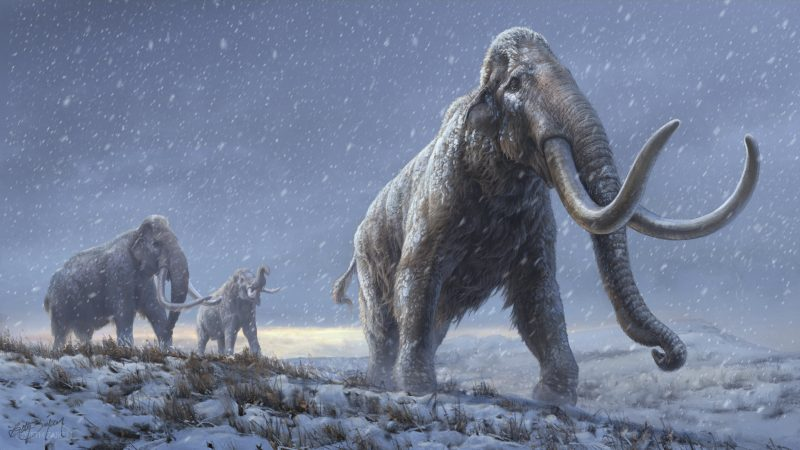 How can we combat climate change by bringing back mammoths - Wel.nl
