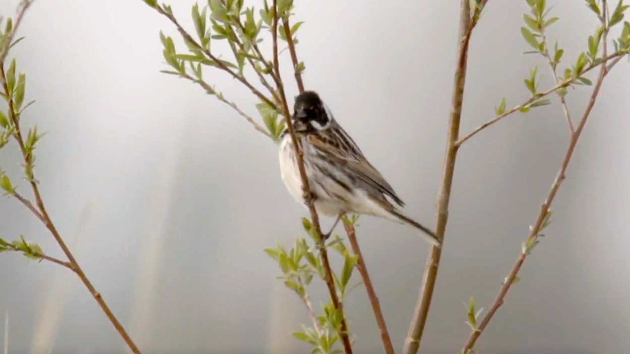 Birds also benefit from Room for the River – Early Birds