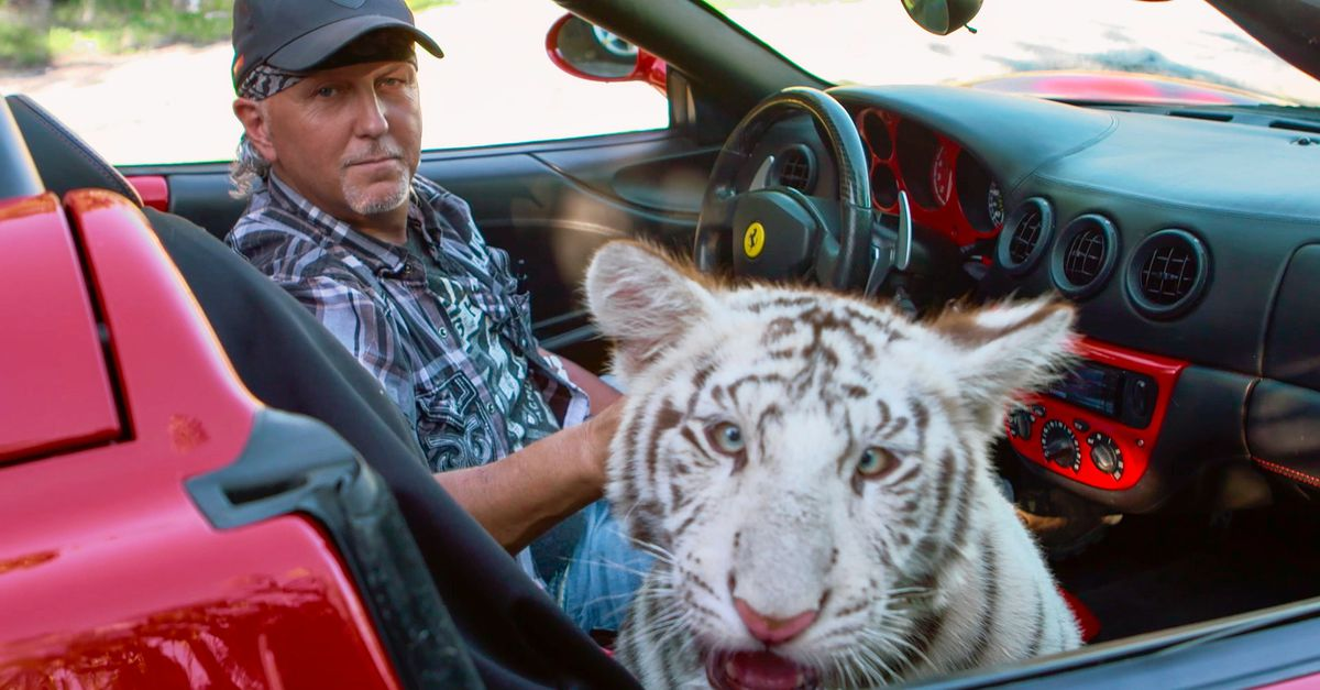 Approximately 70 Feline Tigers from Tiger King Lowe have been captured