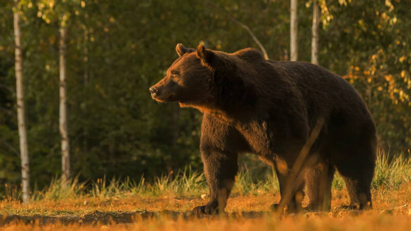 Fury in Romania: Did the Prince of Liechtenstein Catch the Country's Biggest Bear?