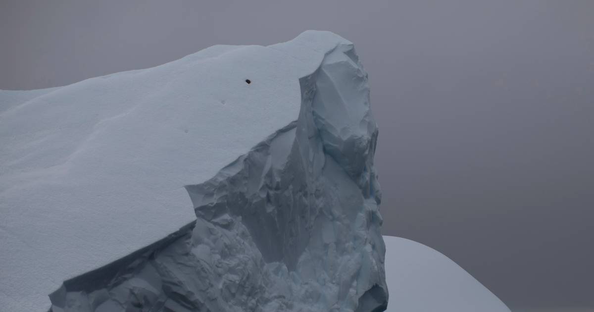 The world's largest iceberg rips through Antarctica |  Science