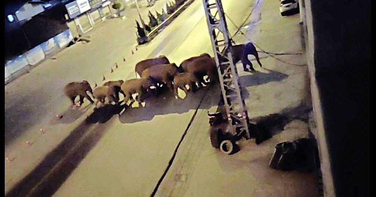 A herd of sick elephants threatens to storm the Chinese capital |  abroad