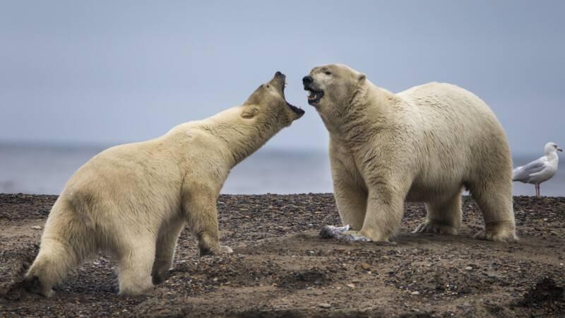 Biden suspends oil and gas exploration permits in Alaska