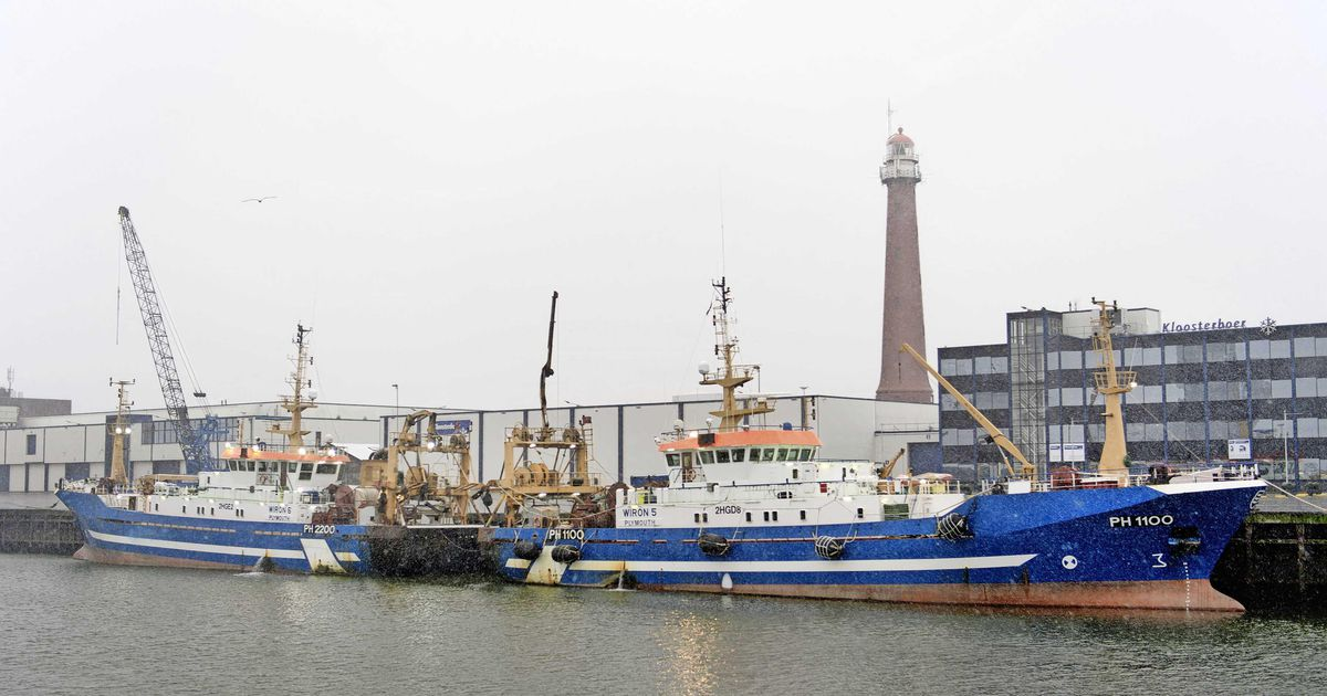 Brussels and London win deal in fishing distribution this year    Finance