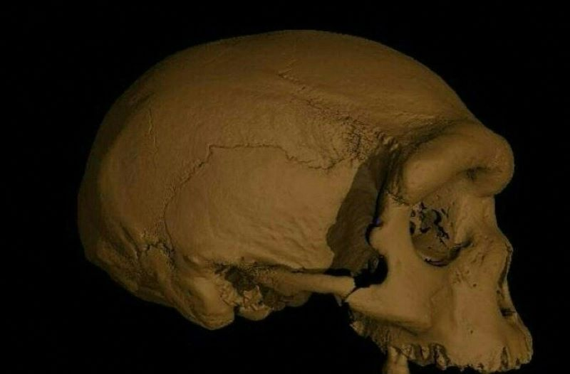 The discovery of a huge human skull forces scientists to rethink evolution