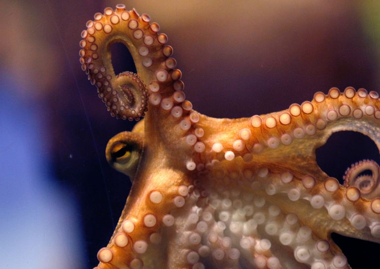 The search for intelligent materials: the ideal lies in the arms of an octopus