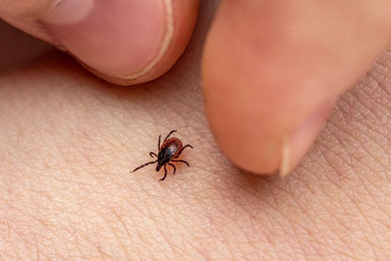 How do you prevent a tick bite?