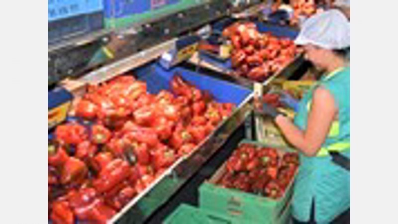 Six companies for fresh produce from Almeria are among the top 30 Andalusian export companies