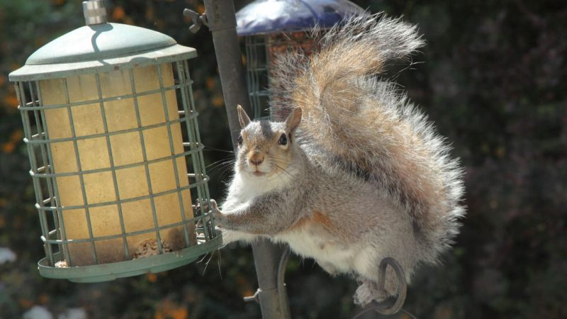 Woman stops squirrel thief using petroleum jelly to feed birds: 'They are very greedy'