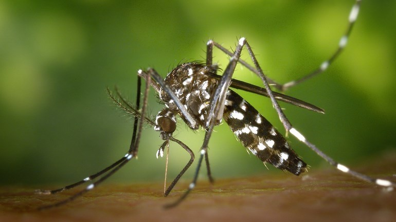 Azar tiger mosquito rediscovered in Azar commercial park