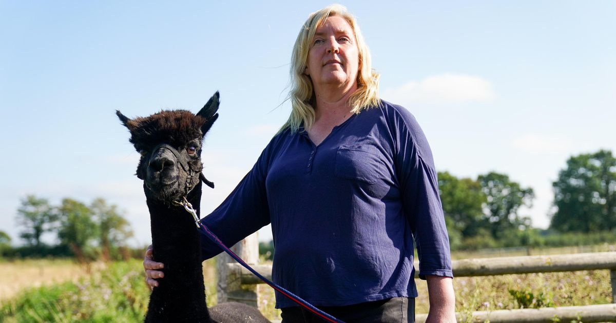 The end now really threatens tuberculosis alpaca Geronimo |  abroad