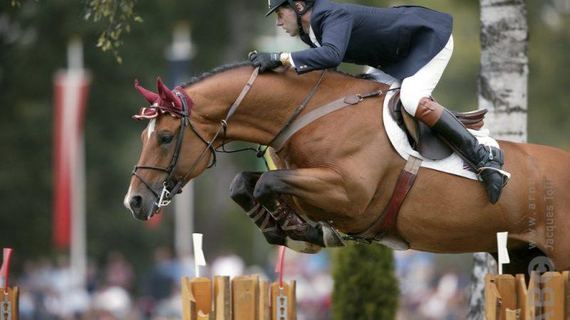 Arko III Cloned Stallion - Horses.nl