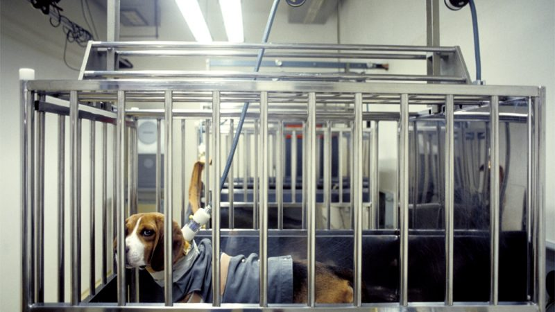 Low number of animal experiments in Brussels
