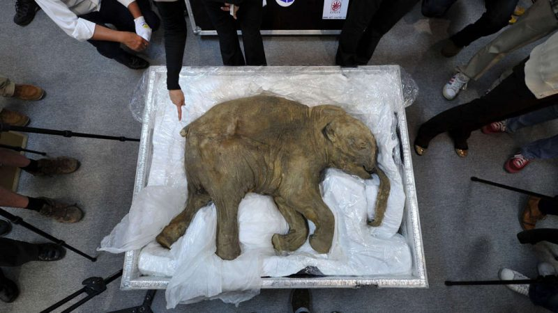 The company wants to bring the extinct woolly mammoth back to life