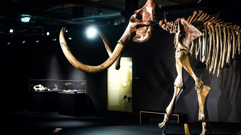 Will mammoths save us from climate change?
