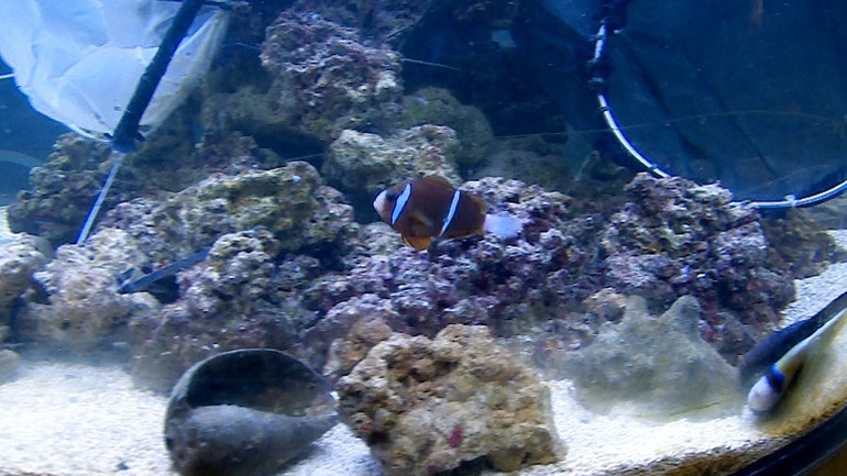 First Arsenal fish for new owner, but clown fish refuses
